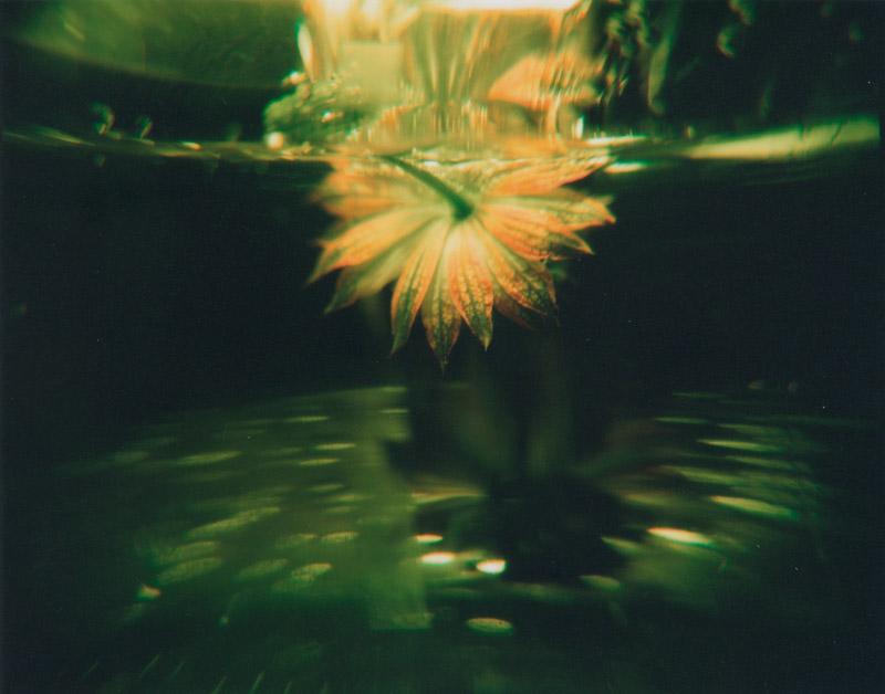 マサ子 写真展「バックミラーからの警鐘」