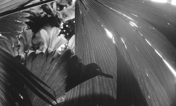 第15回北浜白黒写真倶楽部企画展 「裏側」