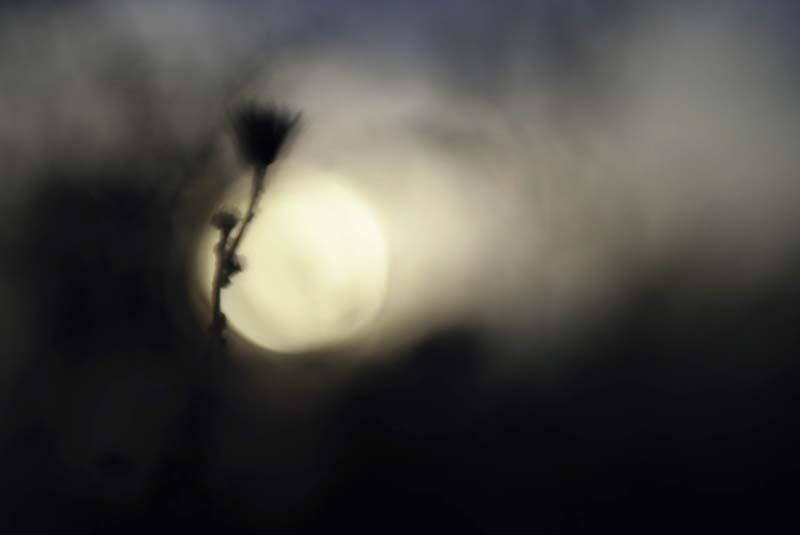 桝矢桂一写真展「水と雲と花と」