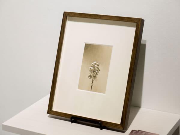 黒田和男 写真展「Cut flowers」