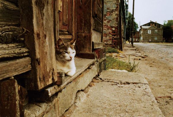 ソラリス企画展 尾仲浩二 写真展「ネコとコージくん」