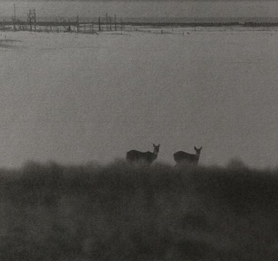 白石ちえこ「鹿渡り」