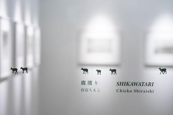 ソラリス企画展/写真集刊行記念展 白石ちえこ「鹿渡り Shikawatari」