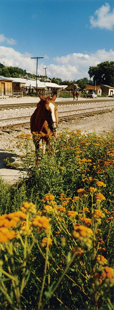 尾仲浩二 馬とサボテン Horse & Cactus